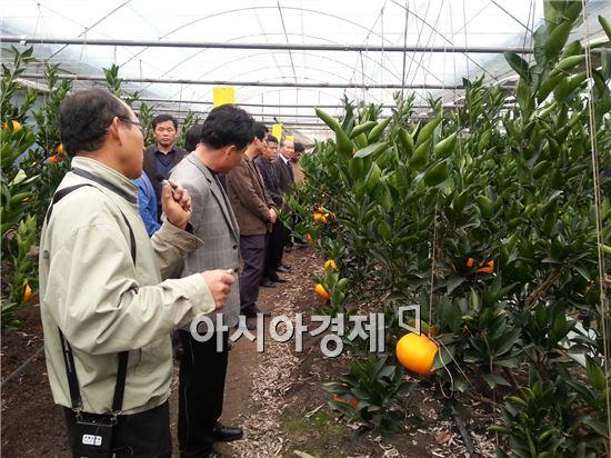 광양시, 기후변화 대응 아열대과수 실증시험 재배 성공