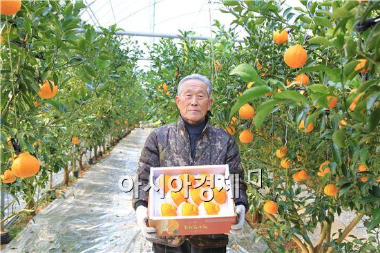 완도 유기농으로 재배한 부지화 출하 준비 한창