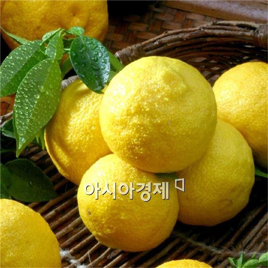 고흥 웰빙 유자·석류 지역특화발전특구 추진
