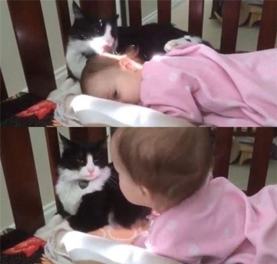 ▲아기 쓰다듬는 고양이.(출처: 온라인 커뮤니티)
