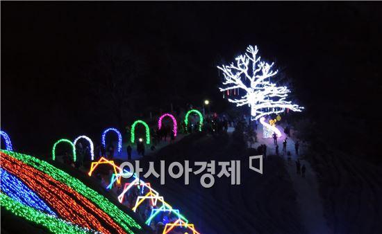 [포토]보성차밭 빛축제 ~겨울밤, 황홀한 빛세계로
