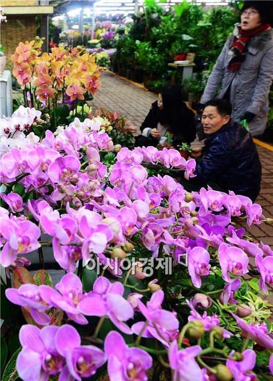 [포토]입춘 앞둔 양재꽃시장
