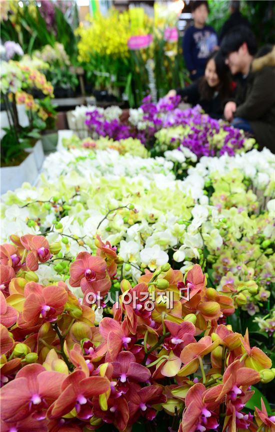 [포토]즐거운 꽃 구경