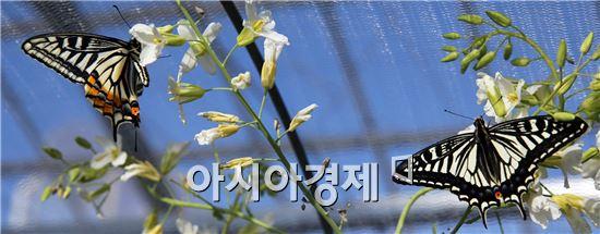 [포토]봄을 부르는 화려한 나비