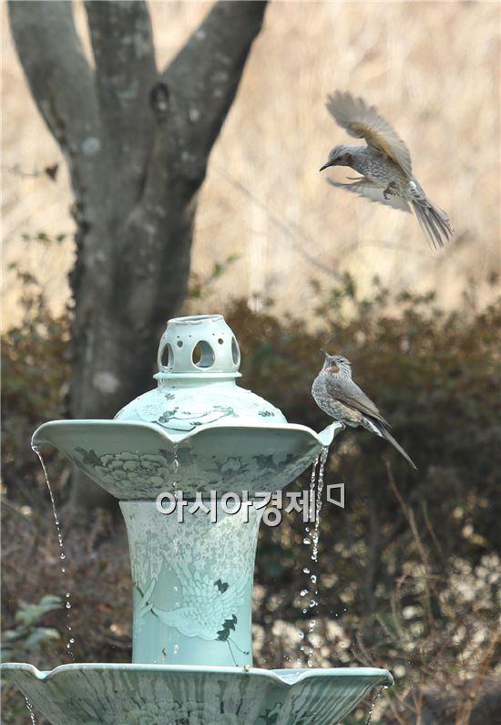 [포토]봄 맞이 하는 직박구리들
