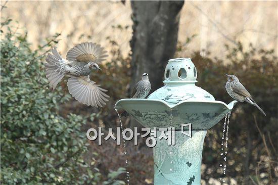 [포토]목 축이는 직박구리