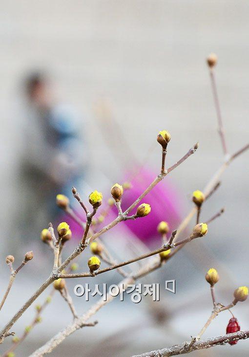 [포토]조금은 이른 봄나들이