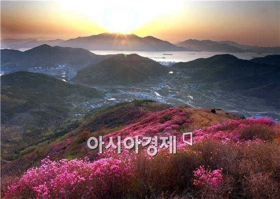 여수 영취산진달래축제 내달 4일 개최