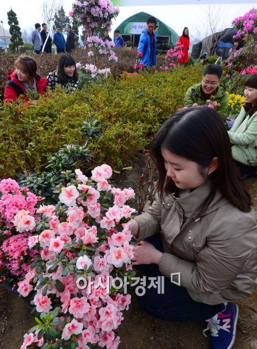 [포토]봄 소식 전하는 '나무시장판매장'