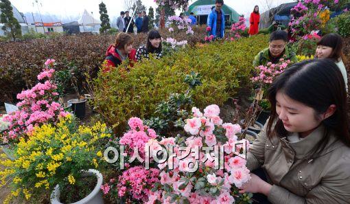 [포토]봄소식 전하는 꽃과 나무들