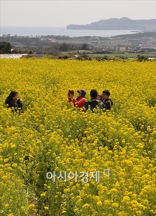 [포토]봄 향기 가득한 제주도