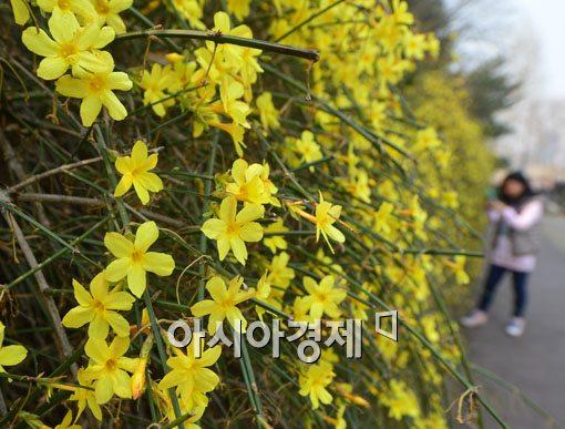 [포토]봄이구나
