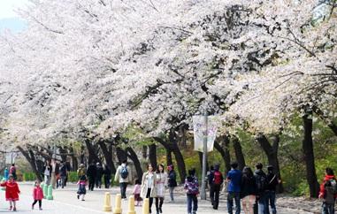 ▲서울시는 나들이하기 좋은 봄꽃길 140곳을 발표했다.
