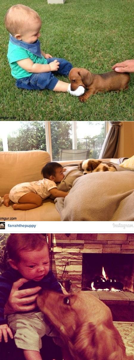 ▲개를 처음 본아기들, 난생 처음 본 개가 너무 신기해(출처:온라인커뮤니티)
