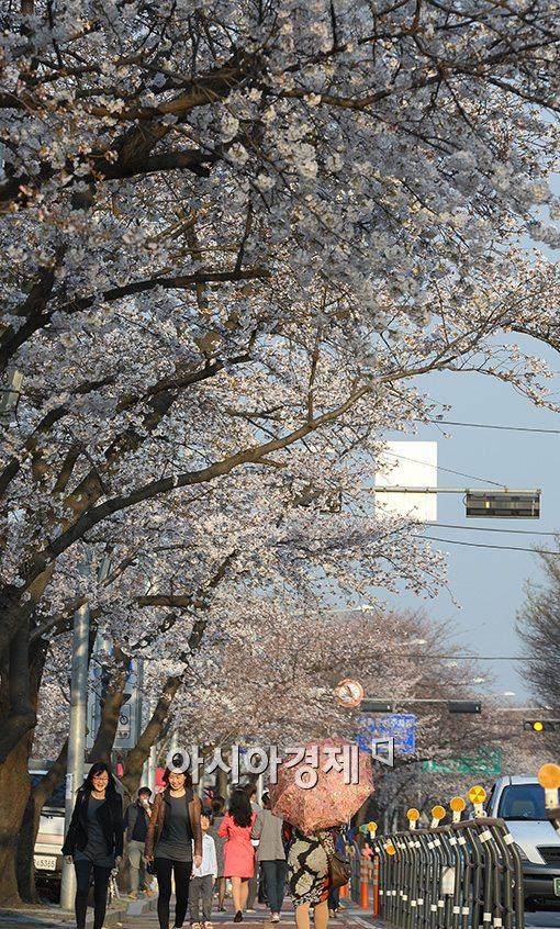[포토]벚꽃 가득한 여의도