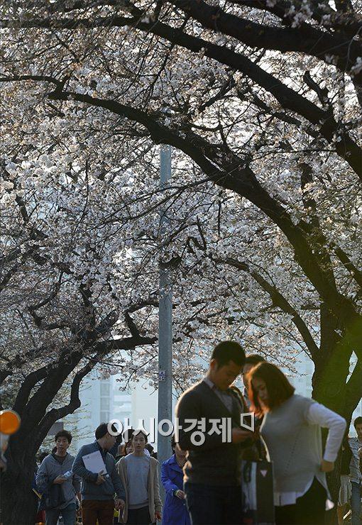 [포토]여의도 '꽃의 향연'