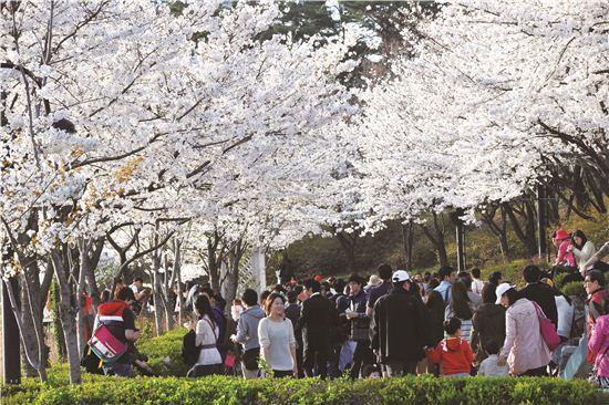 오늘날씨. 송파 석촌호수 벚꽃축제