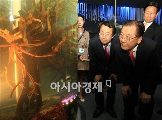 박준영 전남도지사가 11일 오후 '바다 속 인류의 미래, 해조류를 만나다'를 주제로 열린2014 완도국제해조류박람회에 참석, 김종식 완도군수 안내로 주제관에서 다시마등 해조류를 살펴보고 있다.