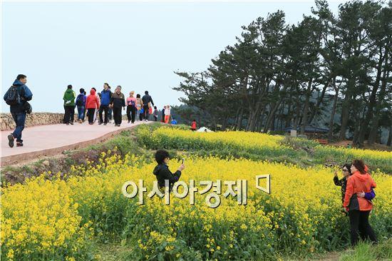 완도 청산도 슬로길에 활짝핀 유채밭에서 관광객들이 사진을 촬영하고있다.