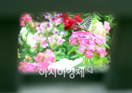 [포토]한 폭의 그림이 된 나비