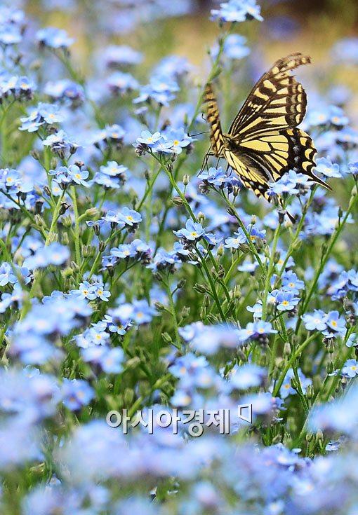 [포토]나비의 춤