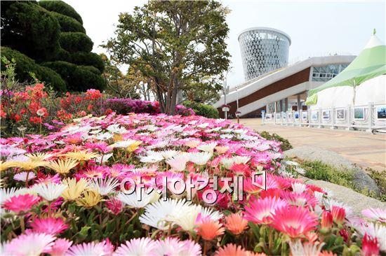 완도해조류박람회 주변에 핀 다양한 꽃들이 만개했다.