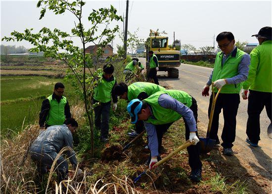 <한국농어촌공사 영산강사업단 직원들이 함평군 손불면 석창마을 주민들과 '아름다운 마을 가꾸기'에 나서 도로변에 벚나무를 심고 있다.>