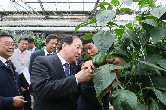 ▲김주하 NH농협은행장은 29일 경남 창원시 대산면에 위치한 파프리카 재배 농장을 방문했다.