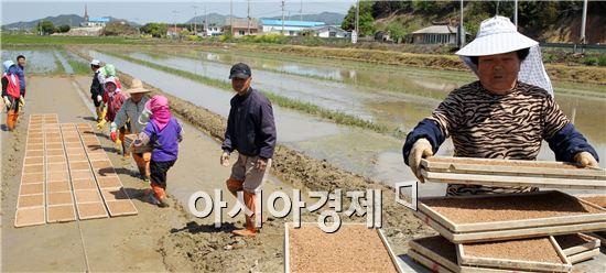 포근한 봄날씨가 이어진 가운데 1일 전남 함평군 손불면 산남리 한 들녘에서 주민들이 못자리를 만들고 있다. 사진제공=함평군