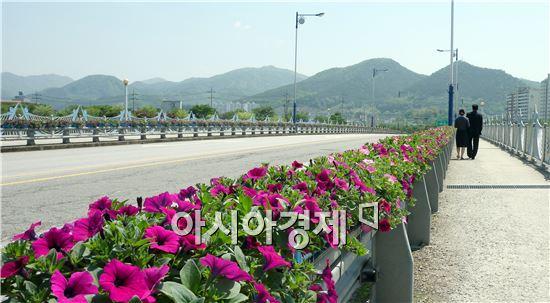 장성군이 '형형색색' 봄꽃을 이용해 시가지를 화사하게 장식하고있다.