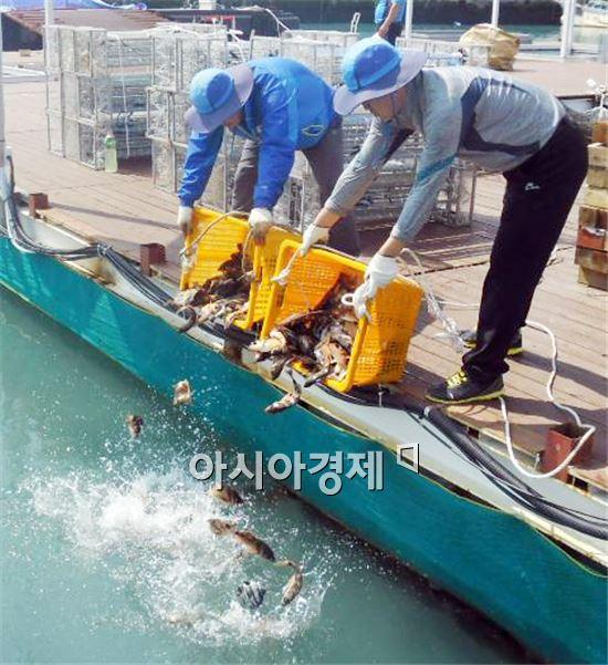 완도해조류박람회 해조류체험장 물고기를  방류하고있다.