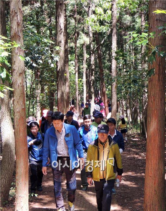 휴일인 18일 초여름 날씨를 보인 가운데 힐링 치유의 숲으로 유명한 장흥 편백숲 우드랜드에 많은 사람들이 찾아와 편백숲에서 나오는  피톤치드를 맡으면서 걸어가고 있다.
