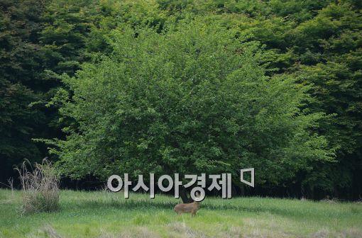 [포토]금수원 공개