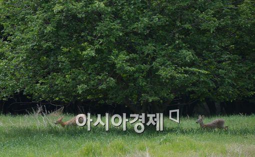 [포토]공개된 금수원, 즐겁게 뛰어노는 고라니