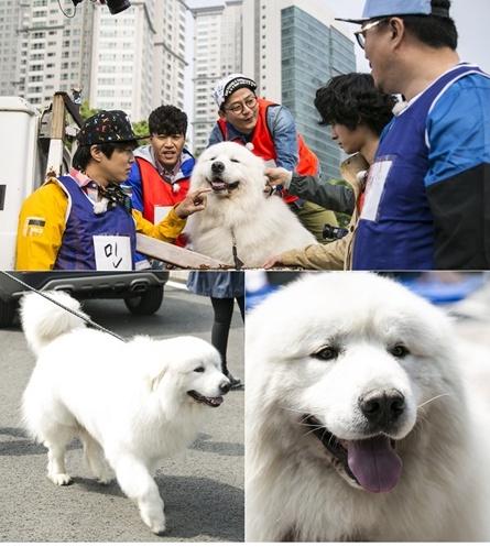 ▲'1박2일'에 등장한 국민애견 '상근이'의 아들 '호야'(사진:KBS 제공)