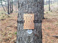유골이 나무 주변에 묻혀 있는 하늘숲추모원 안의 추모목