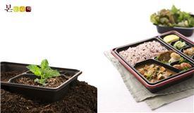 화분으로 재활용된 본도시락 친환경 용기.