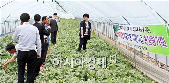 정읍시농업기술센터는 SWT꽃가루 이용 씨 없는 수박 시범사업 평가회를 가졌다.