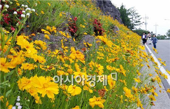 초여름 날씨를 보인 가운데 휴일인 8일 전남 나주시 중흥골드스파 리조트 언덕에  만개한 금계국 꽃길에서 관광객들이  산책을 즐기고 있다.