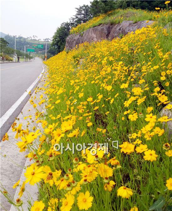 초여름 날씨를 보인 가운데 휴일인 8일 전남 나주시 중흥골드스파 리조트 언덕에  만개한 금계국이 장관이다.