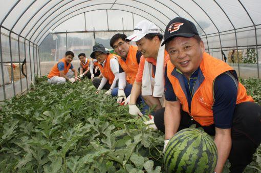 한화 무역부문 박재홍 사장(오른쪽 첫번째)과 임직원들이 8일 예산군 신양면 황계리에 있는 한 농가의 비닐하우스 안에서 수박을 수확하고 있다.