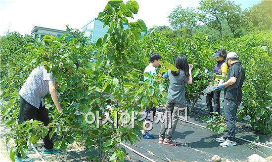 부안군 농업기술센터는  부안 참뽕 힐링체험 행사를 개최했다.
