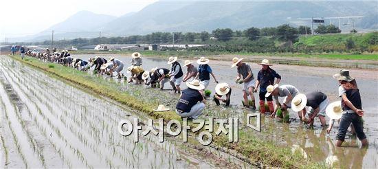구례군농민회는 13일 구례군 용방면에서 통일쌀을 북한에 보내고자 하는 염원을 담아 공동 모내기 행사를 가졌다.