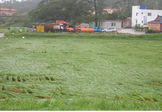 <신안군 농업기술센터는 장마철에 대비해 농작물과 농업시설물이 피해를 입지 않도록 사전 정비해줄 것을 당부했다.>