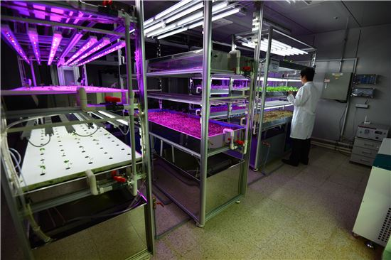 ▲안정적 재배가 가능한 '식물 공장 시스템'.[사진제공=KIST 강릉분원]