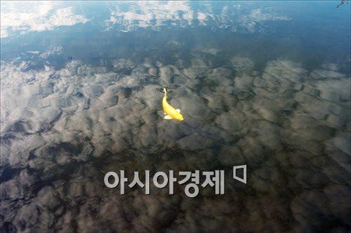 [포토]'구름속 유영'