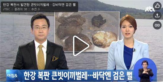 한강에서도 큰빗이끼벌레 발견(사진:JTBC 아침뉴스 캡처)