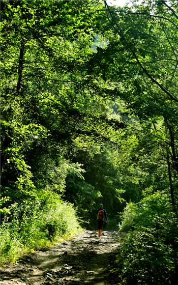 아침가리계곡으로 드는 숲길