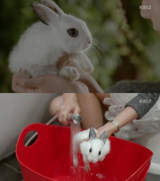 '연애의 발견' 토끼 목욕 장면(사진:KBS2 방송캡처)