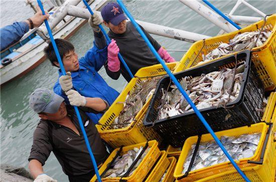선원들이 서해안에서 잡은 꽃게를 배에서 내리고 있다.